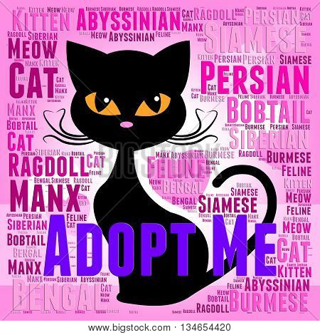Adopt Cat Indicates Kitty Felines And Cats