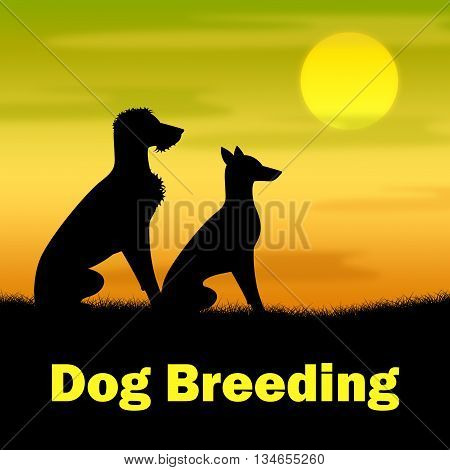 Dog Breeding Means Puppies Puppy And Darkness