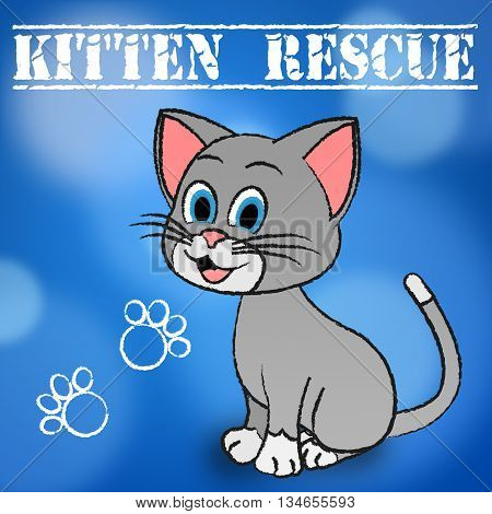 Kitten Rescue Indicates Domestic Cat And Cats