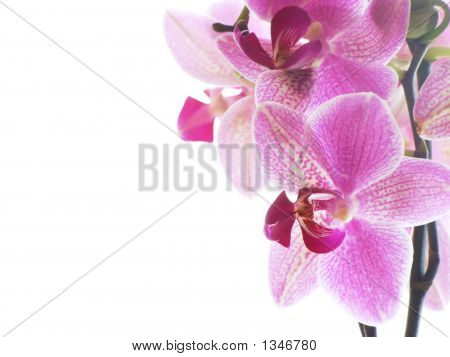 Macro Of A Purple Orchid