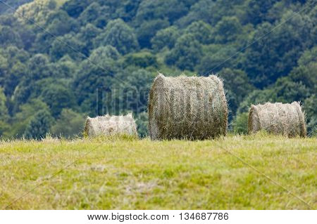 Freshly cut and baled round bales of hay