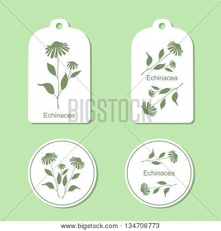 Echinacea leaves and flowers vector illustration isolated. Echinacea green silhouette. Tags and Labels