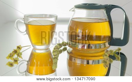 healthy natural herbal tea. antiseptic featured mountain tea.