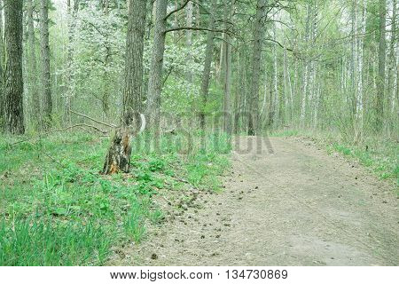 Footpath in wild forest covert. Nature trees in forest.