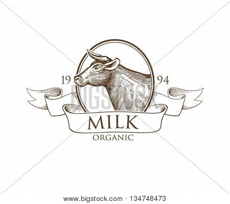 Logo Cow in a Cameo with Ribbons. Cow Vector Illustration. Cow illustration in Vintage Engraving Style. Grunge label for milk. Sticker depicting Cow. Isolated. Eps10 illustration