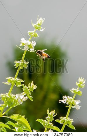 A bee overflying some leaves and flowers.