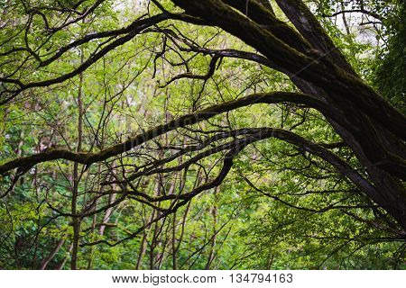 mystical uncontrolled growth enchanted magical fairytale forest