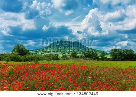 Poppy field in the front mountain and dramatic cloudscape in the back (Kali Basin Badacsony Mountain in Hungary)