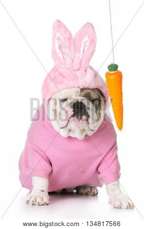 dangling a carrot in front of a dog dressed like an easter bunny