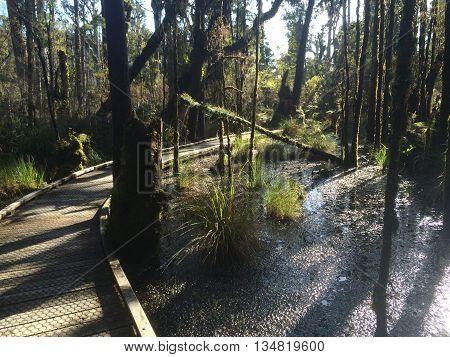 Boardwalk through Ancient swamp forest on New Zealand West Coast 2