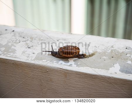 Little snail slow move on the wall in house