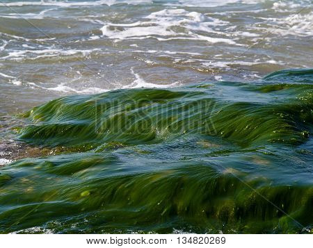 Sea ocean rocks covered with seaweed great beach shore background image