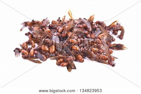 subterranean ants local cuisine of Thai Northern style food Lanna style food In The north of Thailand.