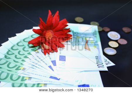 Money With Red Gerbera