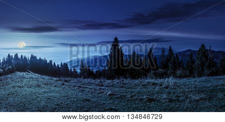 Spruce Forest On Hillside At Night