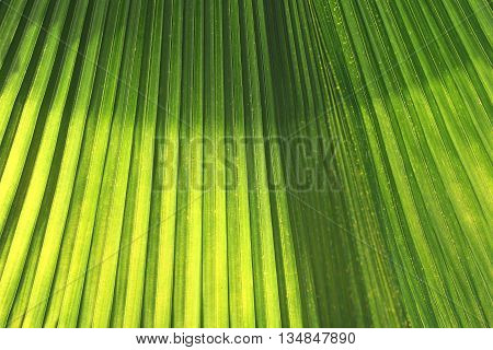 Green leaves with bright sunshine in the morning. the design concept for the natural background.