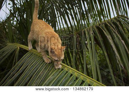Cat climbing on palm tree. Cute kitty on branch.