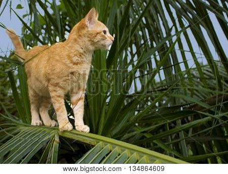 Cute kitty on coconut palm tree. Cat in tropic garden