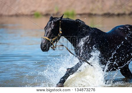 Horses At Pond