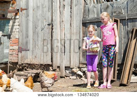 children feed the animals on the farm