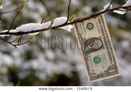 Budding Dollar