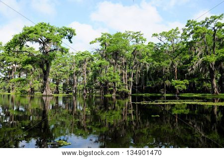 A shot taken in a beautiful Louisiana swamp on a summer day