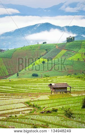 Rice terraces in the rural mountain,Chiang Mai, Thailand