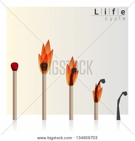Match time lapse, Life cycle, vector, illustration