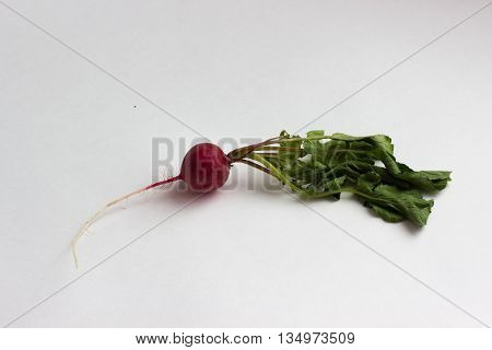 isotaed fresh red radishes with greener over white background