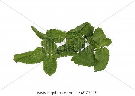 Fresh Spearmint (mint / Mentha spicata) leaves
