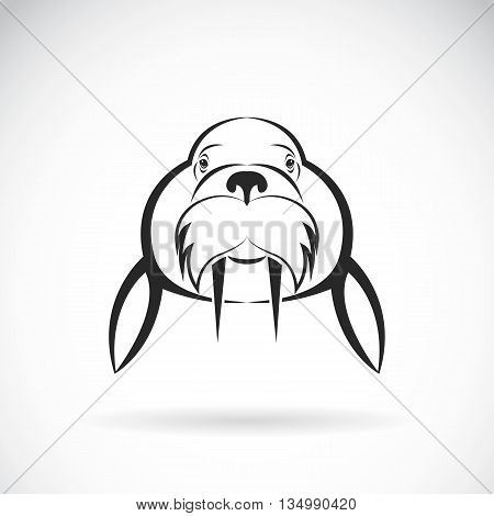 Vector image of Sea lion design on white background. / Vector Sea lion for your design.