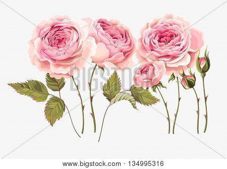 Vector set of gorgeous vintage roses, buds and leaves