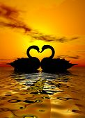 two swans forming a heart under the sunset poster
