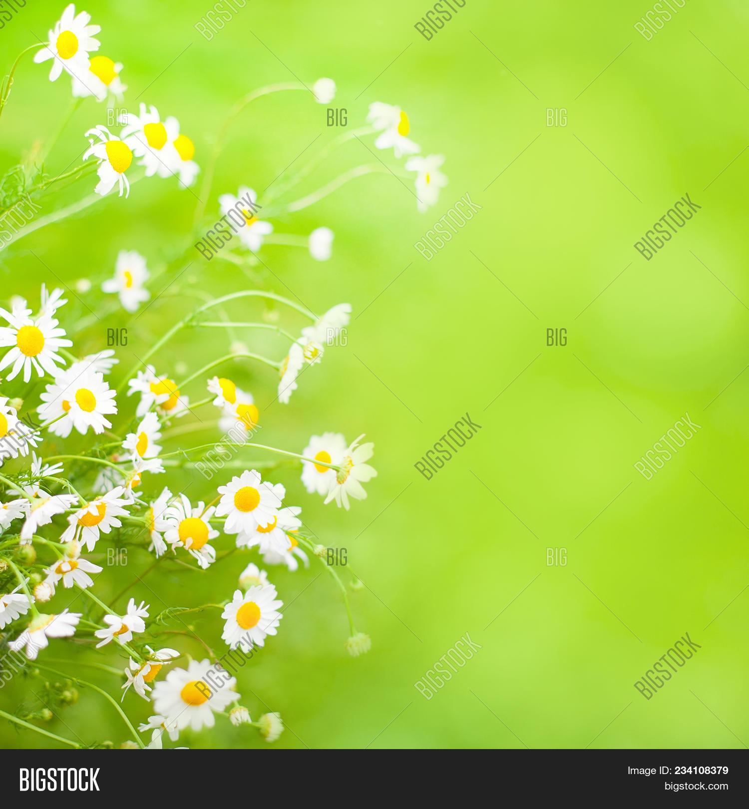 beautiful bright image & photo (free trial) | bigstock