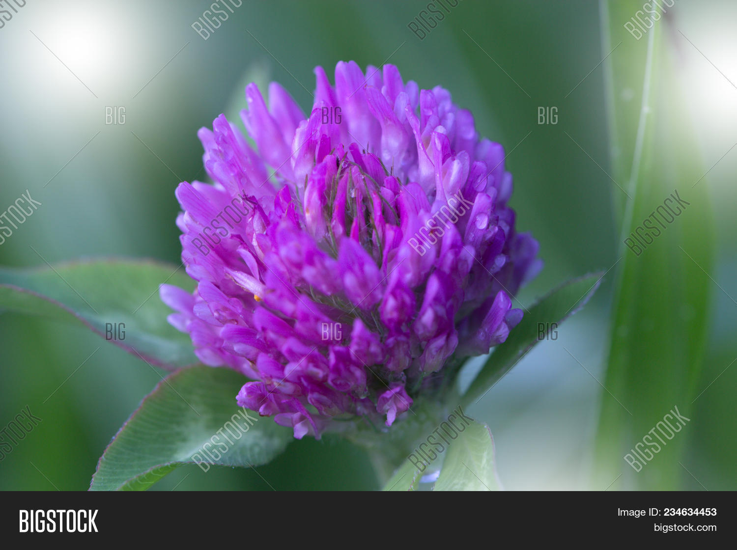 Purple Violet Spring Image Photo Free Trial Bigstock