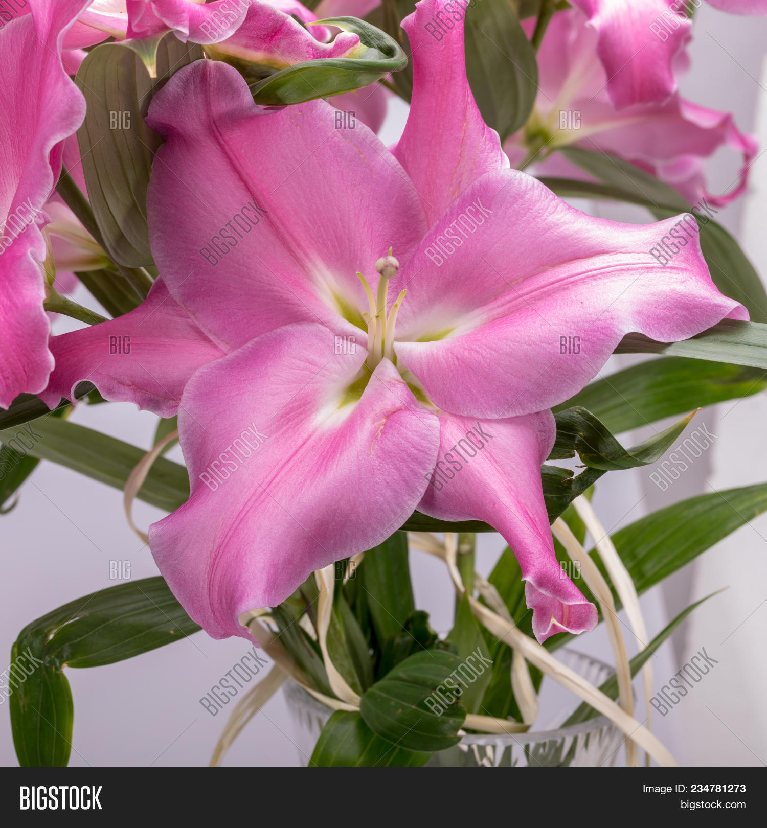 Close pink liles image photo free trial bigstock close up of pink liles flowers common names for species in this genus include mightylinksfo