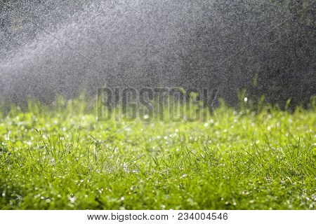 Green Fresh Grass With Falling Drops Of Morning Rain Water. Beautiful Summer Background With Bokeh A