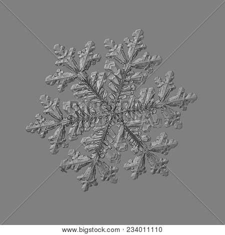 Snowflake Isolated On Uniform Gray Background. Macro Photo Of Real Snow Crystal: Big Stellar Dendrit