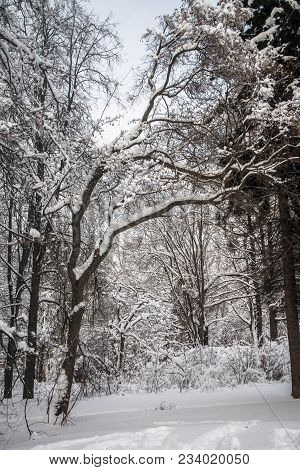 On A Pensive Tranquil Winter Day The Snowy City Park Is Full Of Mysterious Charm And Looks Like A Sn