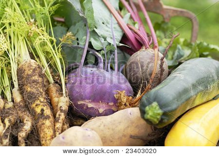 Collection of harvested vegetables.