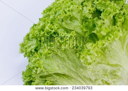 Close Up Fresh Lettuce Salad Leaves. Green Organic Curly Lettuce. Food And Healthy Lifestyle. Benefi