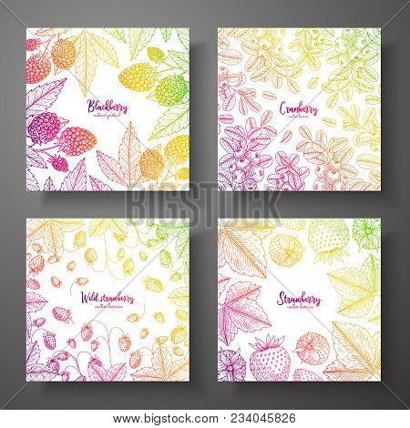Set Of Colorful Botanical Cards With Berries. Great Design For Natural And Organic Products. Vector