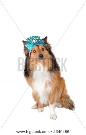 Happy New Year Dog 2