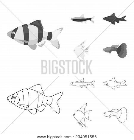 Angelfish, Common, Barbus, Neon.fish Set Collection Icons In Outline, Monochrome Style Vector Symbol