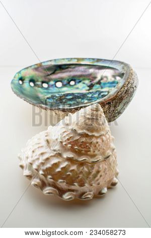 Beautiful Tropical Sea Shells Haliotis Discus Abalone And Pearl Trochus Isolated, Close Up