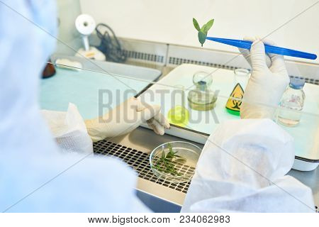 Close-up Of Unrecognizable Environmental Scientist In Protective Gloves Holding Plant Leaves With Tw