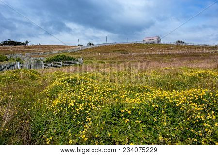 Farm With Picket Fence Under Stormy Skies. Yellow Daisies Shaking Under The Strong Wind In The Foreg
