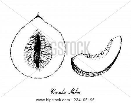 Exotic Fruit, Illustration Hand Drawn Sketch Of Casaba Melon Fruit Isolated On White Background.