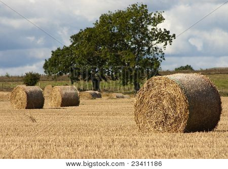 Hay Bales in an English Field