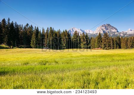 Breathtaking sunny mountain landscape in the village of Zabljak. Location National park Durmitor, Montenegro, Balkans, Europe. Scenic image of amazing summer view. Discover the beauty of earth.